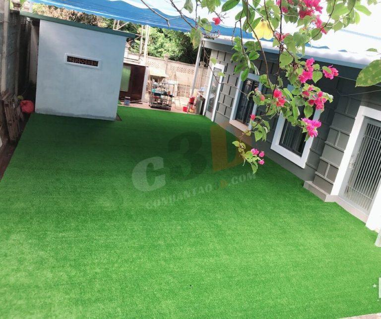Thảm cỏ nhân tạo sân vườn D20-6