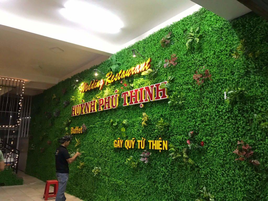 tường cỏ tai chuột điểm cành tại Long An
