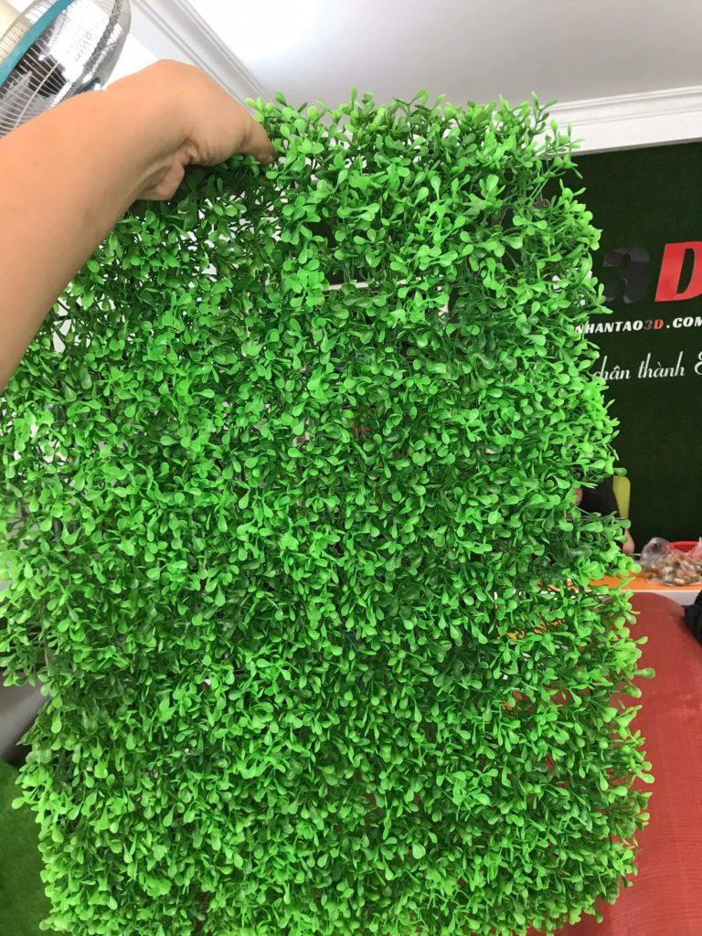 vỉ cỏ nhựa dán tường rau đắng